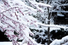 This is springtime? March, 2013
